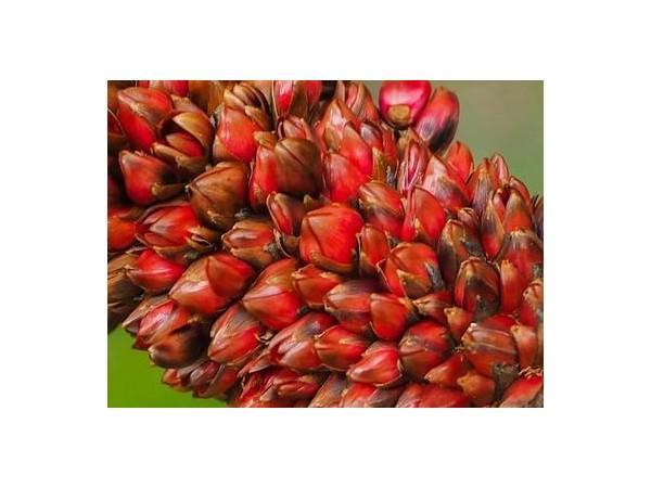 加纳棕榈油生产状况如何?