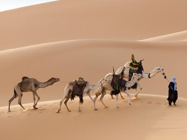 旅游业正成为非洲新动力,非洲旅游热潮!