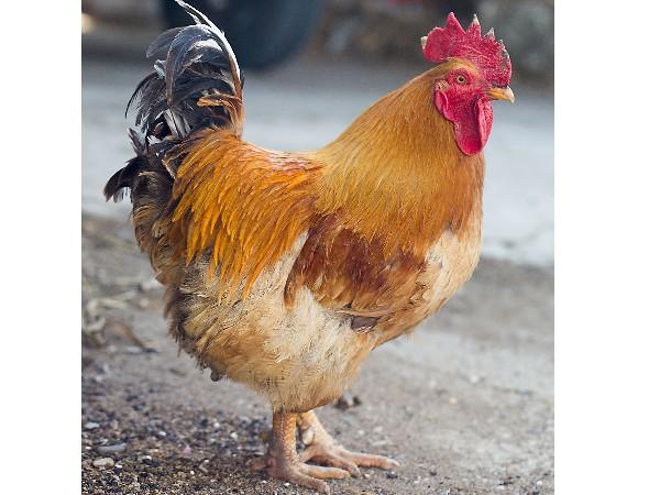 坦桑尼亚家禽业有投资机会吗?