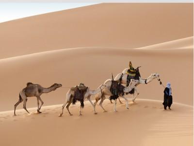 南非8月份外国游客数量出现同比下降